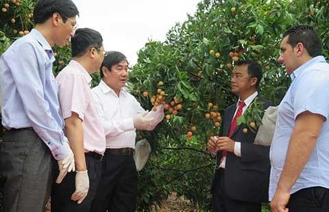 Vải thiều Việt Nam nhận phản hồi tích cực tại thị trường Pháp - ảnh 1