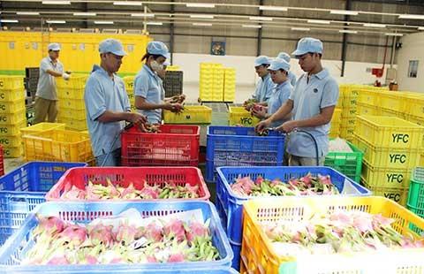 Trung Quốc muốn mua nông sản Việt Nam qua sàn - ảnh 1