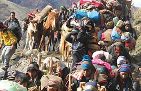 Săn 'Đông trùng hạ thảo' ở Nepal - ảnh 1