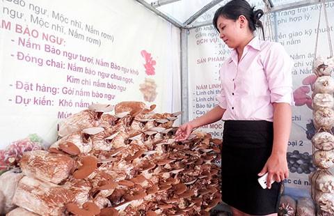 Nấm linh chi Việt thất thế trên sân nhà - ảnh 1