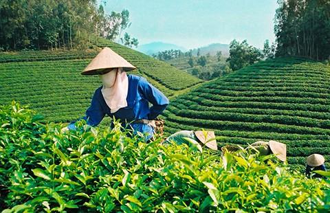 'Cởi trói' cho đại gia rót tiền vào nông nghiệp - ảnh 2