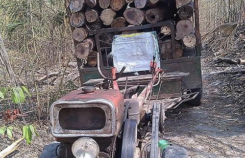 Xử lý trách nhiệm cá nhân để mất rừng - ảnh 1