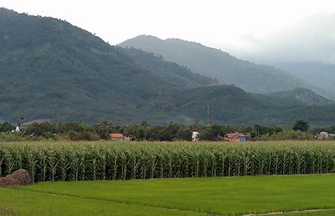 Xót xa 'làng ung thư' ở Bình Thuận - ảnh 1
