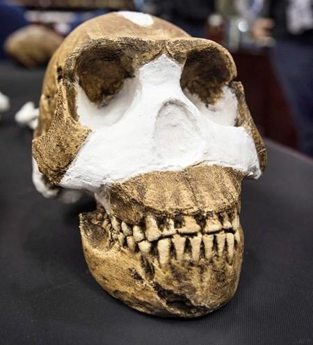 Nam Phi phát hiện loài người cổ đại mới - ảnh 1