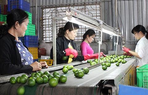 Trái cây đặc sản Việt vào Mỹ, Nhật - ảnh 1