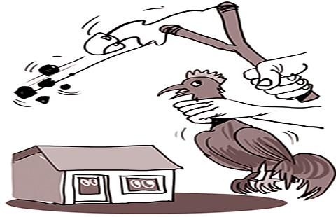 Trộm gà bằng ná thun - ảnh 1