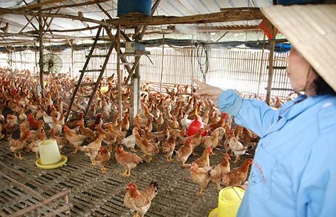 Nông nghiệp 'căng sức' đổi mới trước TPP - ảnh 2
