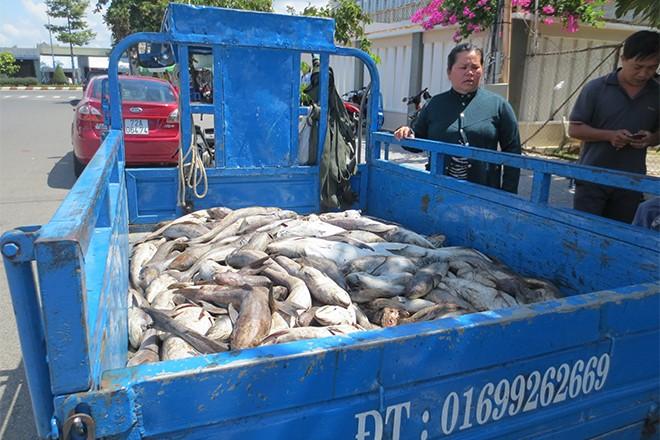 14 cơ sở phải bồi thường tiền tỉ do làm chết cá nuôi - ảnh 1