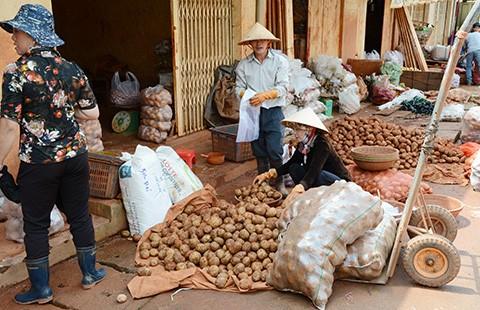 Cấm cửa nông sản Trung Quốc núp bóng hàng Việt - ảnh 1