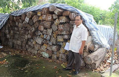 VKSND Tối cao yêu cầu hải quan trả lại gỗ - ảnh 1