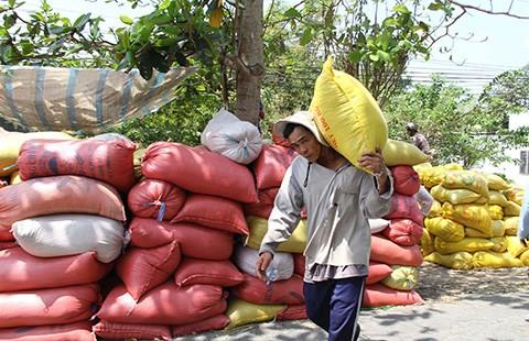 Gạo Việt 'mò mẫm' tìm lợi thế! - ảnh 2