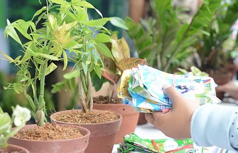 Bảo vệ môi trường từ những chậu cây xanh - ảnh 1