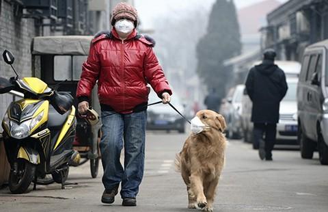 Bắc Kinh chìm trong khói độc - ảnh 3