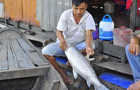 Nước mắt làng cá bè trên sông Đồng Nai - ảnh 2