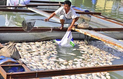 Nước mắt làng cá bè trên sông Đồng Nai - ảnh 3