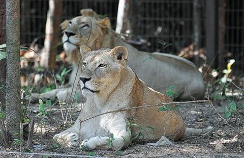 Safari vườn thú hấp dẫn nhất Việt Nam - ảnh 6