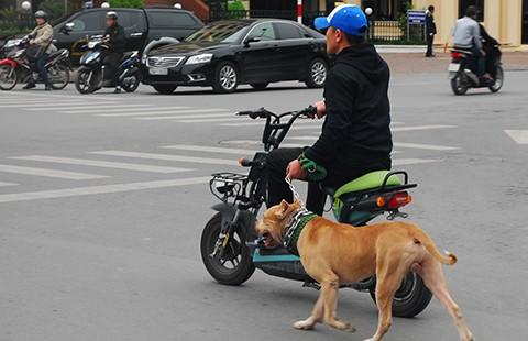 Để chó nuôi cắn người: Phải bồi thường - ảnh 1