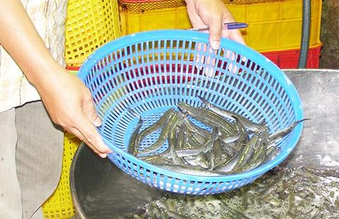 Cá và khô cũng nhiễm chất cấm - ảnh 1