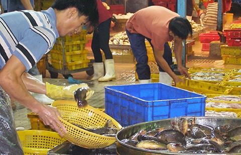 Giám sát cá, khô nhiễm chất cấm cách nào? - ảnh 1