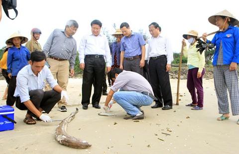 'Truy vết nơi thải độc giết cá không khó' - ảnh 1