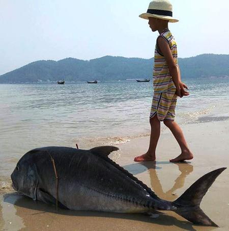 'Thủy triều đỏ' không thể làm cá chết quy mô lớn - ảnh 2