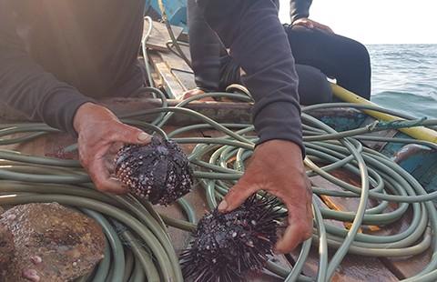 Quảng Bình: Rạn san hô gần bờ đang chết - ảnh 1