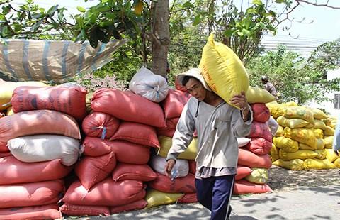 Thái Lan xả kho gạo khổng lồ, gạo Việt 'nín thở' - ảnh 1