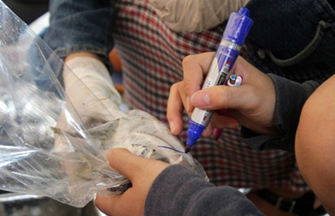 'Cá nục chứa phenol ở Quảng Trị vẫn ăn được' - ảnh 1