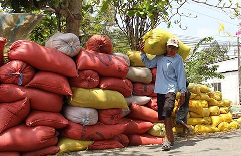 Trung Quốc sang tận ruộng kiểm tra gạo Việt - ảnh 1