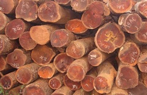 'Tự xử' gỗ trắc, nguyên trưởng Kiểm lâm vùng II bị truy tố - ảnh 1
