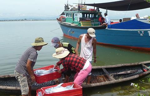 Vụ cá chết: Trình Chính phủ phương án hỗ trợ ngư dân - ảnh 1