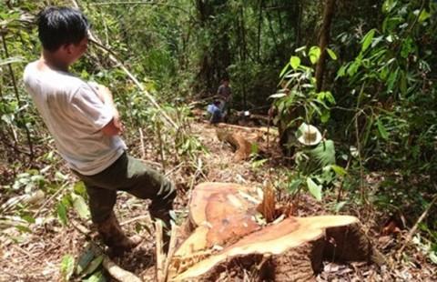 Truy bắt trùm phá rừng thủy điện Đồng Nai 5 - ảnh 1
