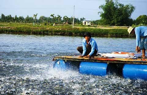 Hàng trăm sản phẩm thức ăn thủy sản lưu hành trái phép  - ảnh 2