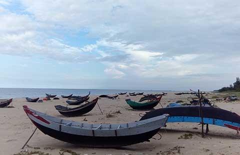 Chưa có kết luận về an toàn cá biển miền Trung - ảnh 1