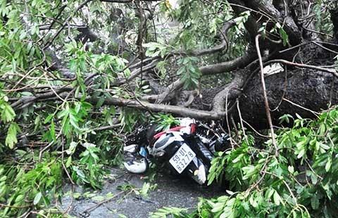 TP.HCM: Sáu ngày, 60 cây xanh ngã đổ  - ảnh 1