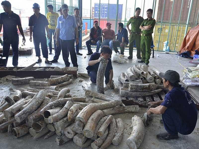 Phát hiện gần 1 tấn ngà voi tại cảng Cát Lái - ảnh 1
