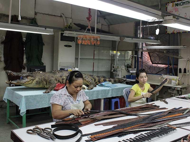 Đến cá sấu cũng 'sợ' thương lái Trung Quốc - ảnh 1