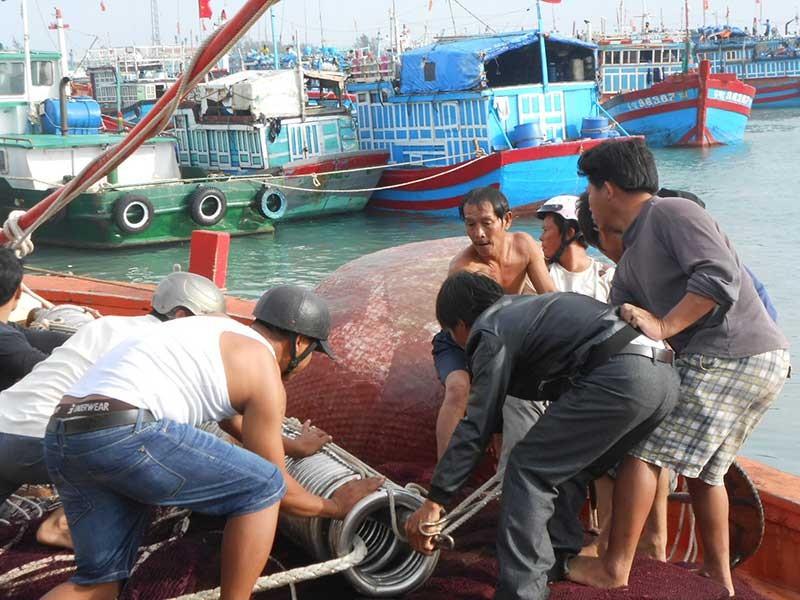 Ngư dân Lý Sơn hối hả vươn khơi dịp cuối năm - ảnh 1