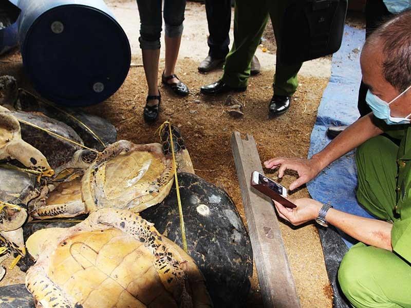 Tàng trữ 8.000 xác rùa biển, tai tượng - ảnh 1