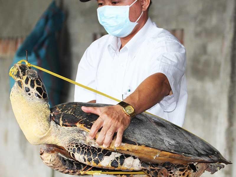 Tàng trữ 8.000 xác rùa biển, tai tượng - ảnh 2
