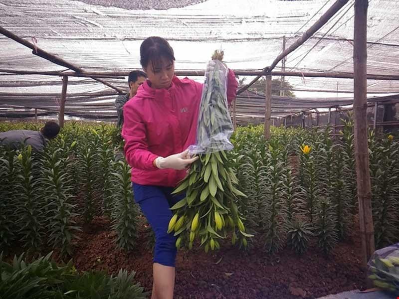 Hoa nở sớm, người trồng méo mặt - ảnh 1