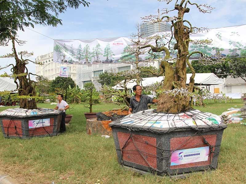 Hoa đẹp, kiểng lạ ba miền hội tụ về Sài Gòn - ảnh 1