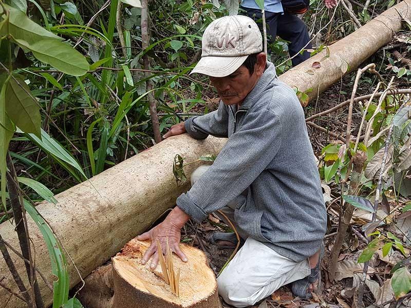 Vụ phá rừng để nuôi bò: Sẽ báo cáo Thủ tướng - ảnh 1