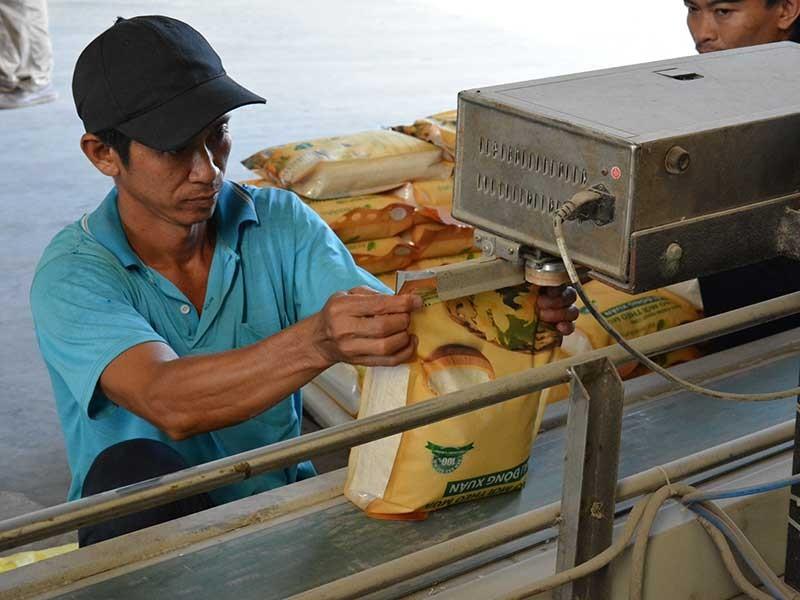 Hạt gạo Việt Nam bị chê - ảnh 1