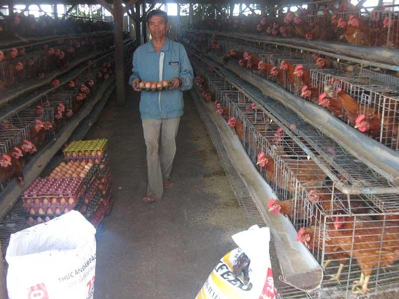 400 tấn thịt gà đầu tiên của Việt Nam 'bay sang Nhật - ảnh 1