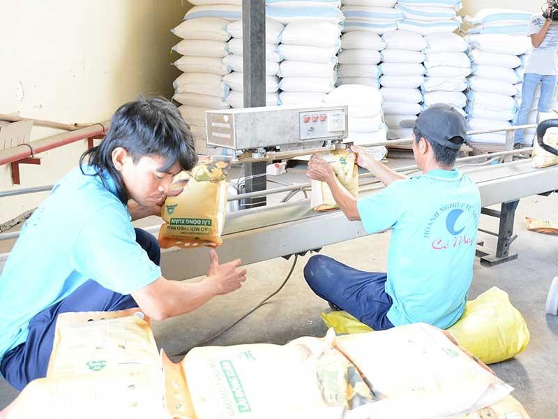 Cấm xuất khẩu gạo là hết sức vô lý - ảnh 1
