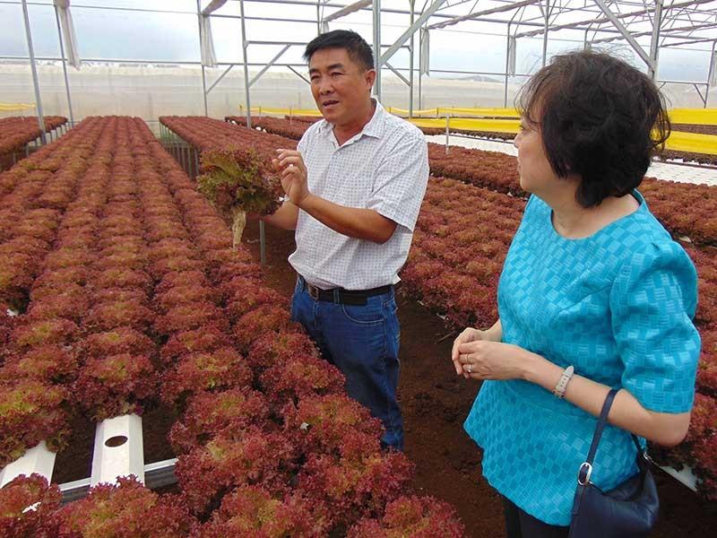 Bà Phong Lan tìm rau sạch cho dân - ảnh 1