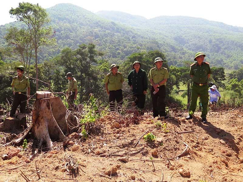 Giám định rừng ở Bình Định để khởi tố - ảnh 1