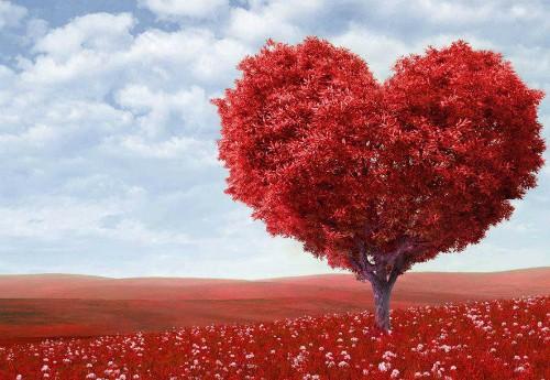 10 sự thật thú vị về trái tim con người - ảnh 1