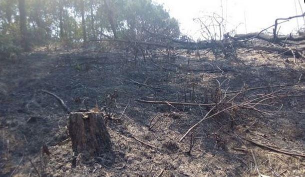 Thương tâm hai người đàn ông chết cháy trong rừng - ảnh 1